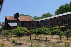 Sister Creek Vineyard & Winery outside Sisterdale, TX
