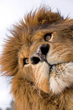 Whatcha doin' down there?  Lion around?