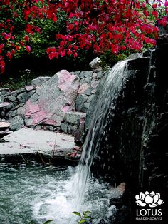 This setout is so pretty it almost makes me cry. Lotus, Crying, Landscaping, River, Pretty, How To Make, Outdoor, Art, Outdoors