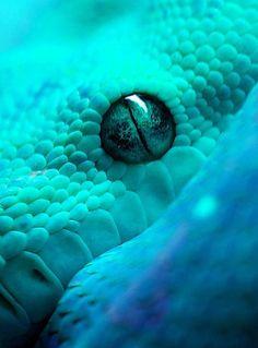 blue and green snake eye