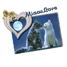 Miaou Love.