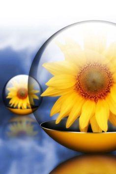 Sunflower in a Bubble