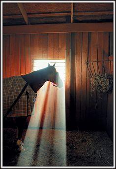 Lovely morning light