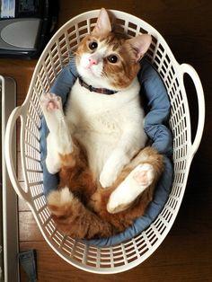 laundry cat.