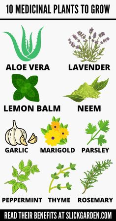 10 MEDICINAL PLANTS AND THEIR USES | Slick Garden. Where growing plants at home for medicinal purposes is trending at a rapid pace, it is actually an age-old practice. Herbs have been used as medicines by various cultures around the world for centuries. Herbs are the basis of Chinese herbal medicine, Indian Ayurveda medicinal system, Hippocratic(Greek) elemental healing system, and many other ancient healing practices. Growing Marigolds, Growing Herbs, Growing Flowers, Growing Vegetables, Regrow Vegetables, Medicine Garden, Herbal Medicine, Herbal Plants, Medicinal Plants
