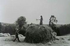 Recolleita de herba seca, Agolada. Finais dos anos 70. Fotografía de Ton Van Vliet.