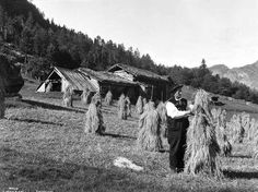 Galleri NOR; Setesdal kornet paa staur 1934