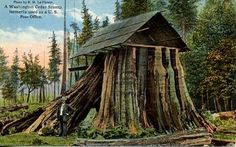 A gigantic cedar stump in Port Angeles, Washington, that served as a post office until 1905.