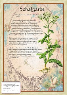 Schafgarbe www. - Another! Healing Herbs, Medicinal Herbs, All About Plants, Plant Illustration, Fantastic Art, Book Of Shadows, Alternative Medicine, Botanical Art, Herb Garden