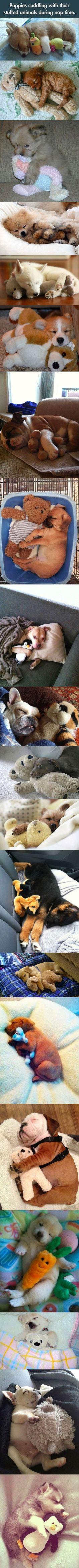 Sleeping and cuddling.