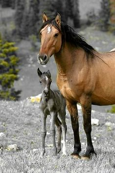 Horse Pictures Only Baby Horses, Cute Horses, Horse Love, Wild Horses, All The Pretty Horses, Beautiful Horses, Animals Beautiful, Horse Pictures, Animal Pictures