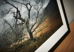 Glen Etive Tree, Scottish Highlands - 2012 © Julian Calverley 2013