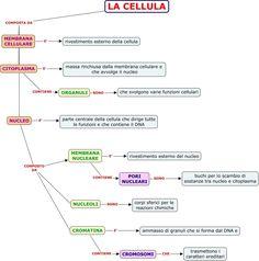 COMPOSIZIONE CELLULA.cmap (948×958)