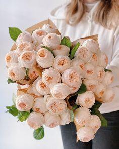 "Flower shop in Prague on Instagram: ""Incredible big headed garden roses Emma🤍🤍🤍 Special price - 95 Kč/pc❗️Orders: +420 775683780 (WhatsApp, Viber, Telegram)"" Garden Roses, Prague, The Incredibles, Flowers, Shopping, Instagram, Royal Icing Flowers, Flower, Blossoms"