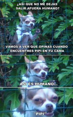 Memes de humor: Ellos siempre se vengan de ti →  #memesdivertidos…