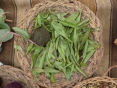 VERDE: folhas de chilca.