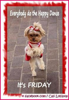 Cute yorkie, doing happy dance Cute Animals Images, Cute Baby Animals, Funny Dog Photos, Funny Dogs, Old Age Humor, Funny Good Morning Quotes, Pet Dogs, Pets, Yorkshire Terrier Puppies