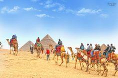 Camel riding at the Pyramids. Cairo, Egypt.