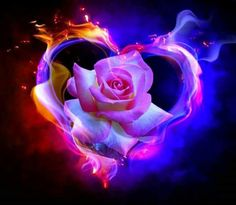 More love frames on my homepage Love Heart Symbol, I Love Heart, Love Rose, Hearts And Roses, Blue Roses, Purple Rose, Fire And Ice Roses, Pink Rose Tattoos, Flame Art