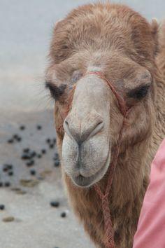 Morocco, Africa where I rode a camel!