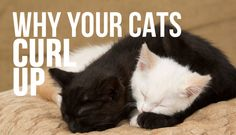 See why your cats turn around in a circle before sleeping.