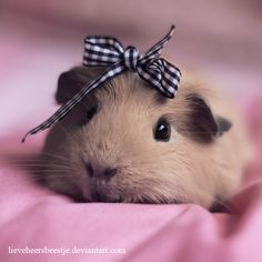 Guinea Pig - reminds me of my childhood. I always kept guinea pigs and my children had them too!