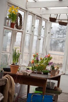 I would like a greenhouse/garden shed...and I'm thinking about building one with reclaimed materials!