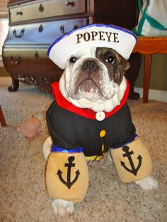 Halloween is almost here! Check out the top English Bulldog Halloween costumes to inspire from! Big Dog Halloween Costumes, Pet Costumes, Halloween Crafts, English Bulldog Funny, English Bulldogs, Cute Puppies, Cute Dogs, Funny Animal Pictures, Cute Animals