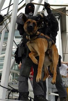 Military dog on the way to action!