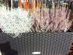 Lechuza zu Top-Preisen: z.B. Balconera 80 Cottage Granit Komplettset 1. Wahl ab 29,59 € auf 2-flowerpower.com
