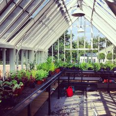 Our #Alitex glasshouse at Torberry - great for growing on and propagation!