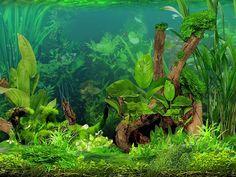 Screenshot-6-Suesswasser-Aquarium-3D-1024x768-4290bd6ab99c1922.jpg 1.024×768 Pixel