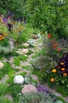 Skyshades Garden, Chelsea. -love the bright orange zinnias next to the dark purple foliage.