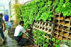 Kasetsart University Urban Farm Vertical Green Block. an innovative rooftop garden to provide food for university staff in case of emergency