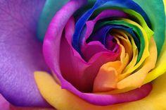 Róże wcale nie muszą być czerwone! http://www.fototapeta24.pl/ #róża #rose #rosephotography #fototapeta #fototapeta24pl