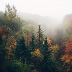 City dweller dreaming of a place i have never been Autumn Aesthetic, Nature Aesthetic, Autumn Cozy, Autumn Photography, Pretty Pictures, The Great Outdoors, Bonsai, Beautiful Places, Scenery