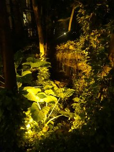 The Reef garden by night.