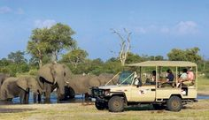 Savute Elephant Camp #JSElephant  Could you imagine being this close to these magestic, gentle giants!?  *amazing*