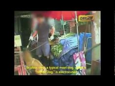 Seongnam, South Korea: Close Down Moran Market Dog Slaughterhouses-Enforce The Animal Protection Law!