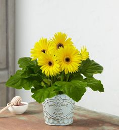 "They'll be buzzing with delight over our sunny yellow Gerbera daisy plant, Honey Bee Farms Daisy. We've designed these cheery, daisy blooms in an embossed honeycomb planter with a decorative ""Honey Bee Farms"" design. It's the perfect summer plant for every green-thumb. Summer Flowers To Plant, Summer Plants, Planting Flowers, Bee Farm, Gerbera, Summer Wreath, Honeycomb, Farms, Summer Fun"