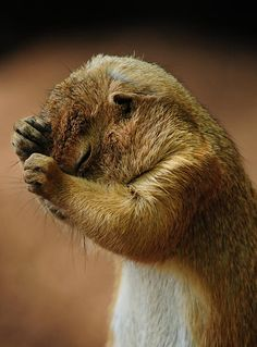 Headache >>  how I feel right now plus PRAIRIE DOG