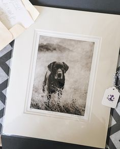 Natalia Martinez (@thelabsand.co) • Instagram • custom pet etching in packaging by Greyboy Pet Prints (dog art)