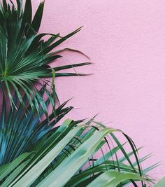 palms on pink  #plantsonpink