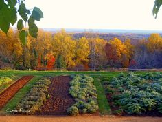 Thomas Jefferson's home Monticello overlooking his lovely gardens.  I have stood at this exact spot in the fall and was privileged to witness this amazing colorful view!