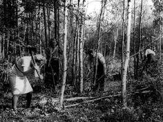Kuvagalleria: Kalevan vanhat kuvat kertovat Hietasaaren historiasta. Huviloille mentiin ennen venekyydillä. Hietasaaren mottitalkoissa oli 1940-luvulla porukkaa kaupunginjohtajasta lähtien.