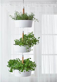 Ikea 파 3, 부추 5, lettuce 2, basil, parsley, mint,