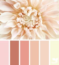 Flora Tones | Design Seeds