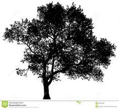 http://thumbs.dreamstime.com/z/silhouette-d-un-arbre-solitaire-36022453.jpg