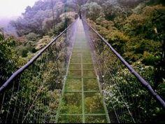 Reserva Biológica Bosque Nuboso Monteverde. Aquí se pueden encontrar una selva tropical, montañas llenas de vegetación, animales y plantas exóticas.