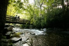 """Gatlinburg, TN - Just 2.3 miles east of Gatlinburg is a hidden jewel known as """"The Local's Entrance to the Park"""": Greenbrier.  Tube, swim, picnic, hike, sunbathe, fish, bird watch, bicycle, or just sit back on a rock along the river enjoying the fantastic scenery. Ramsay Cascades, Porter's Creek, and Injun Creek Trail Heads are also located here for those who desire to explore. Since this is a local spot, you can usually avoid the crowds that sometimes fill the most popular trails in the…"""